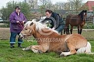 Paard komt bij uit narcose
