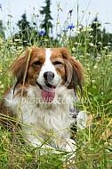 Kooiker in het gras