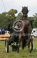 Amerikaans miniatuurpaard voor de kar