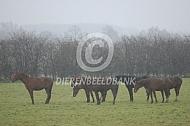 Paarden de regen
