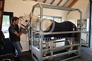 Behandeling gebit paard