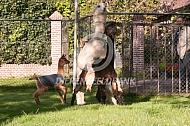 Dekking alpaca