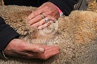 Fijnheid verzels alpacawol