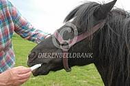 Ontwormen pony