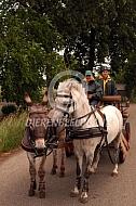 Mennen met paard en ezel