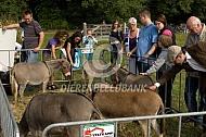 De ezelkeuring
