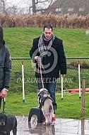 Göttingen minipig in a dog training school