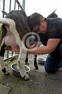Handmelken van geiten