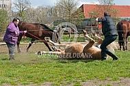 Paard onder narcose