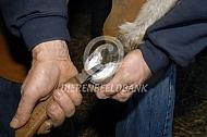 Hoefverzorging ezels