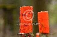 Wedsrtrijd boomslepen