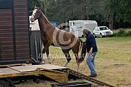 Paard komt uit de trailer