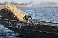 Hooi vervoeren met de boot