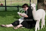Alpaca cria krijgt de fles