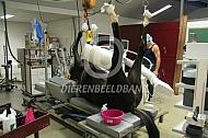 Operatie paard