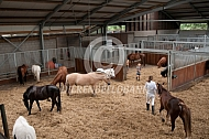 Groepshuisvesting paarden